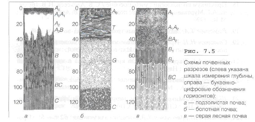 Почвенные горизонты различаются по цвету, плотности, влажности, структуре, химическому составу, кислотности...